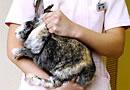 ウサギの抱き方