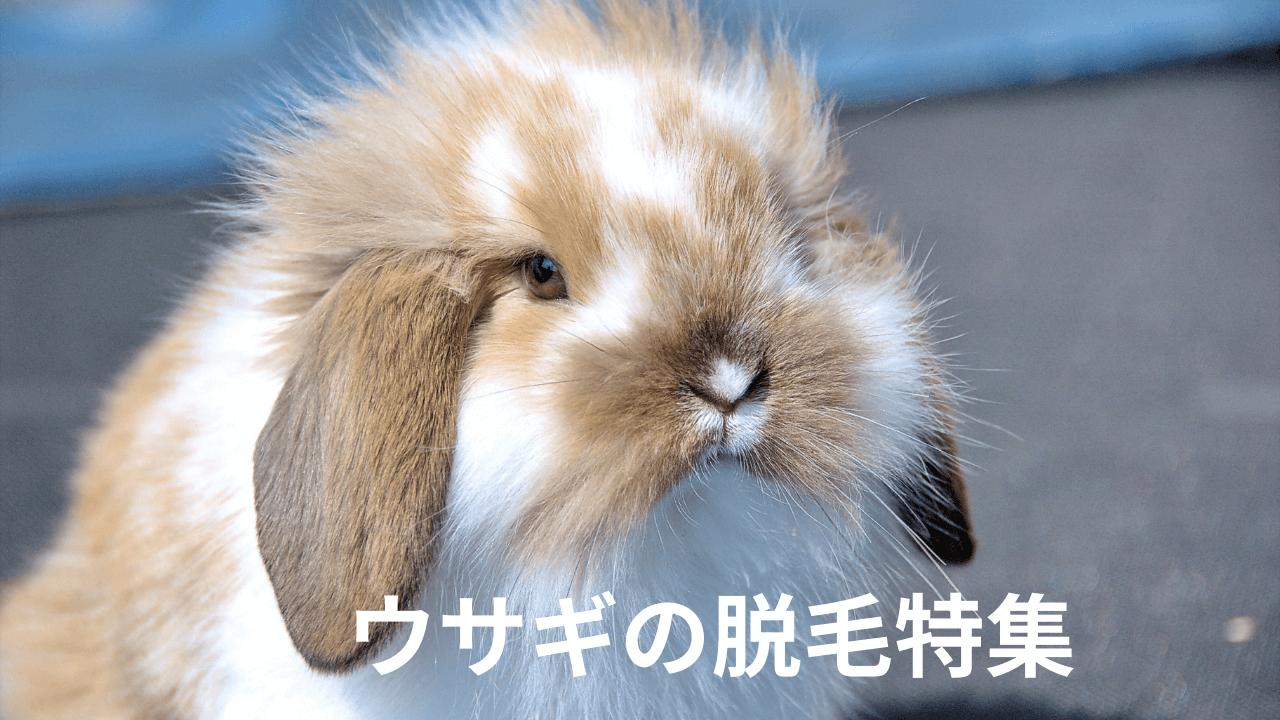 ウサギの脱毛特集