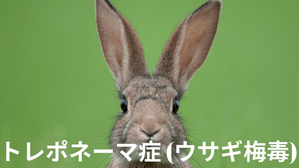 ウサギ梅毒