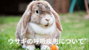 ウサギの呼吸器疾患について
