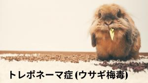 トレポネーマ症、ウサギ梅毒