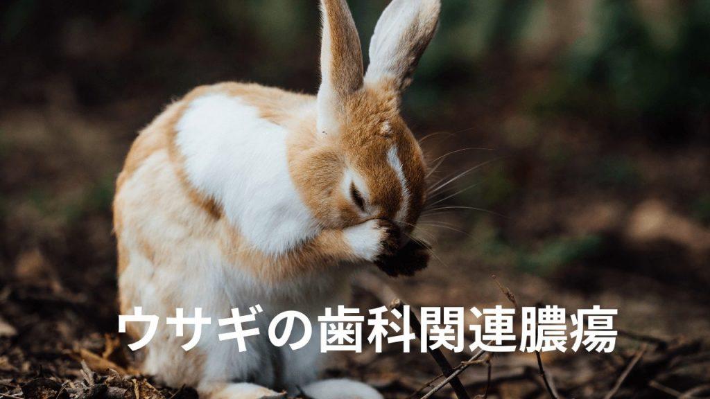 ウサギの歯科関連腫瘍